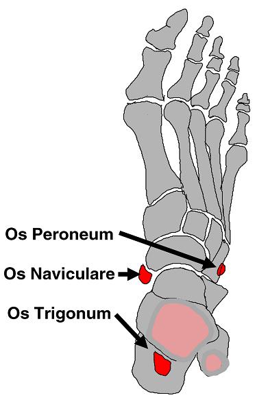 Extra Bones | Whole foot